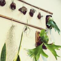 まるで芸術作品みたい!壁掛けに使える多肉植物!の画像