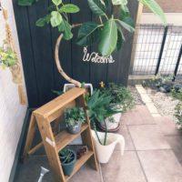 背の高い棚にもマッチ!お部屋に個性を出すならゴムの木を飾ろうの画像