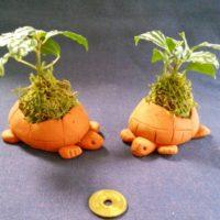 多肉植物をインテリアに。おすすめの飾り方の画像