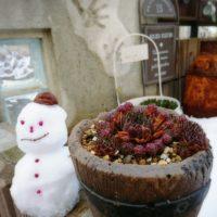 アエオニウムと寒さの関係性とは?冬の育て方を知ろう!の画像