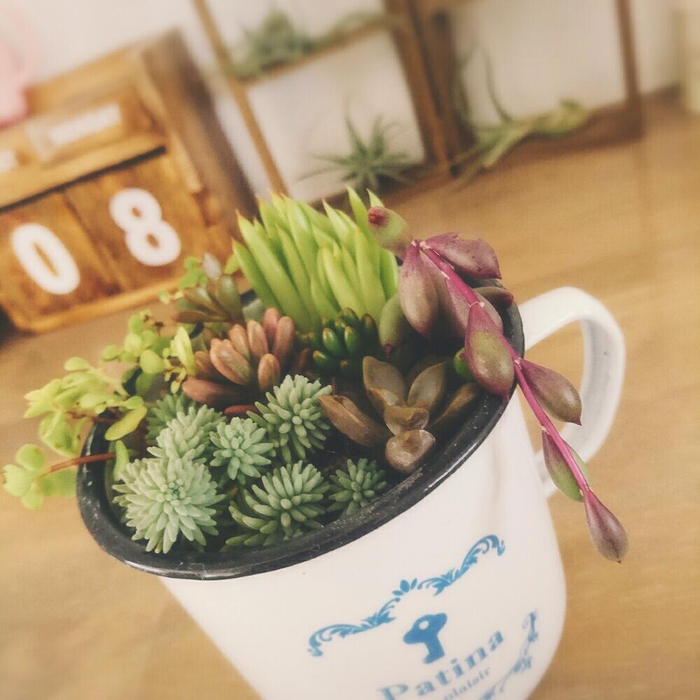 Photo by 4姉妹のママ☆さん