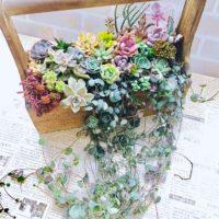ガガイモ科の植物を使って寄せ植えを作ろう!の画像