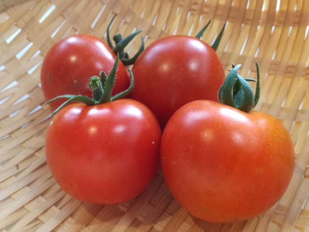 トマト とまと 実 赤