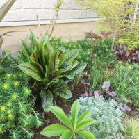 シェードガーデンとは|おすすめの日陰でも育つ植物11選とおしゃれな作り方の画像