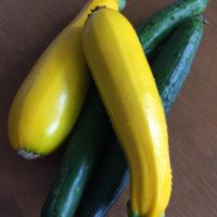 ズッキーニの育て方| 苗植えや収穫、保存方法は?プランター栽培もOK?の画像
