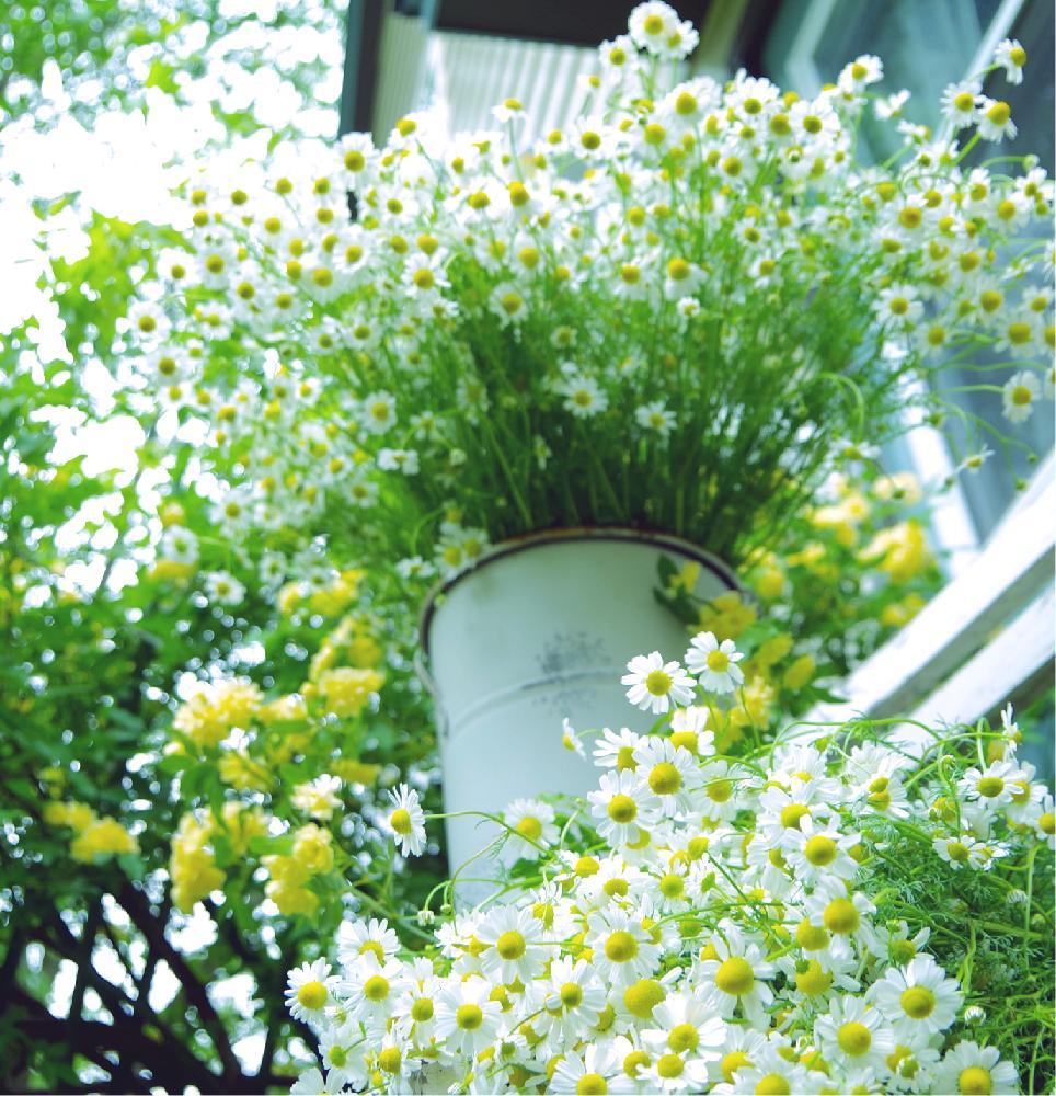 Photo by クリ*さん