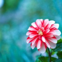 「ありがとう」「感謝」の花言葉をもつ花10選の画像
