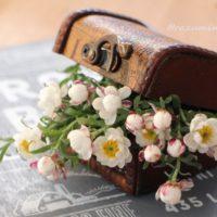 花かんざし(花簪)の育て方|苗の植え付けや挿し芽の増やし方は?冬越しするには?の画像