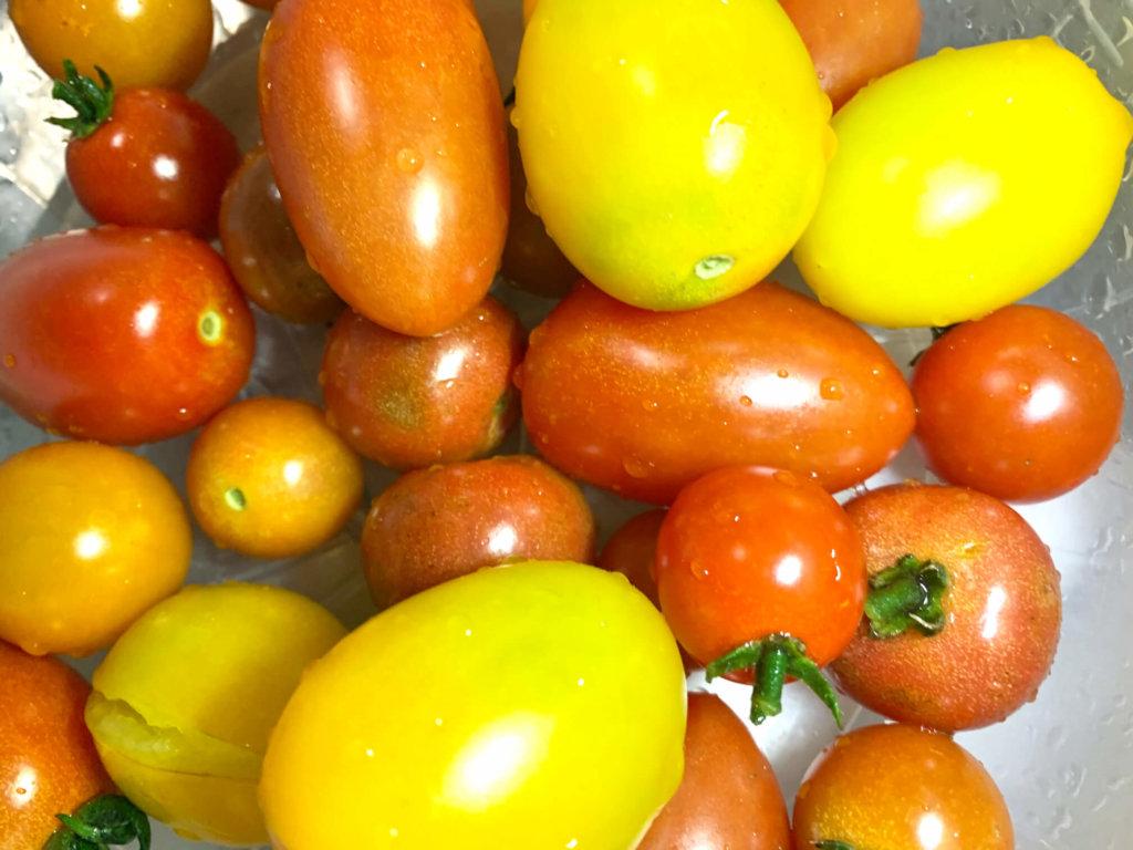 トマト ミニトマト 赤 黄色