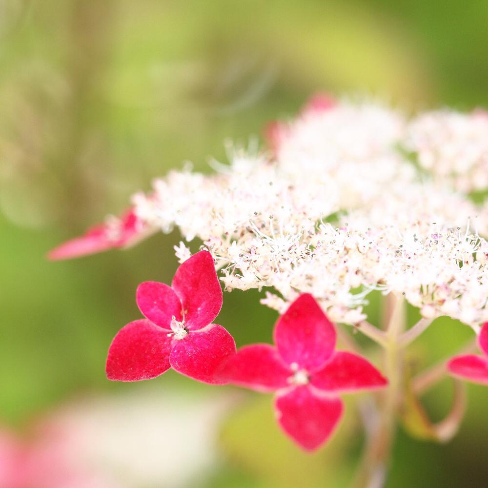 Photo by YAYOさん