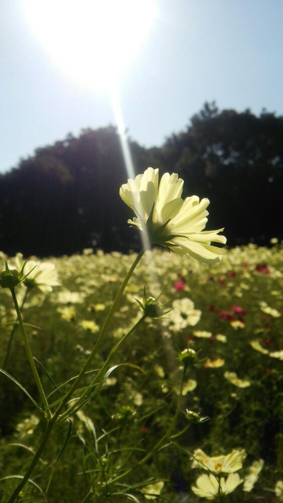 Photo by ひーさん