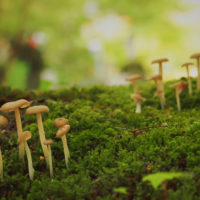 涼を感じる「苔」を日常に。マクロな苔の世界を覗いてみよう!の画像