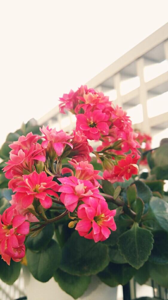 Photo by myaさん