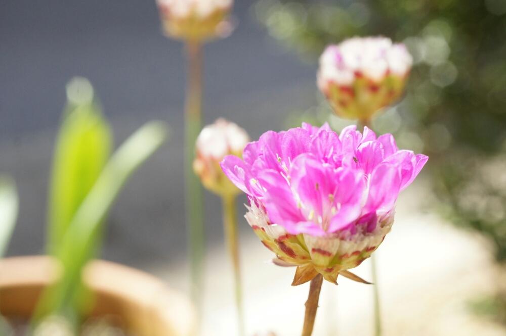 Photo by ひよこままさん