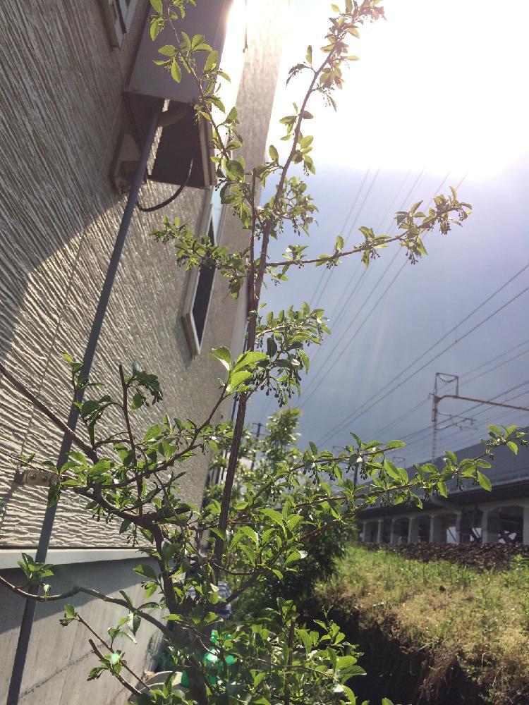 Photo by 菜の花さん