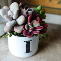 """お気に入りのカップに飾ろう!多肉植物の""""マグカップ寄せ""""が可愛い♡の画像"""