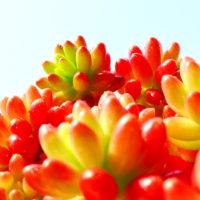 多肉植物って知ってる?女性に人気の多肉植物とは?人気の3タイプを紹介!の画像