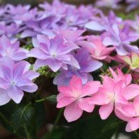 感謝のキモチをお花に込めて。母の日にあげたい花&お手入れのコツの画像