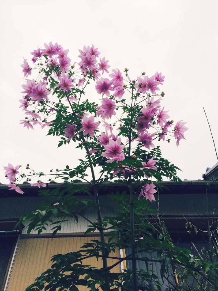 Photo by あやさん