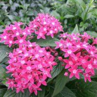 初夏の花壇で育てたい!夏の暑さや強い日差しにも負けない植物9選の画像