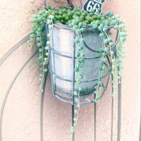 グリーンネックレスの花言葉|増やし方や、種類などもご紹介の画像