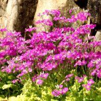 山野草とは|季節ごとの代表的な種類を紹介の画像