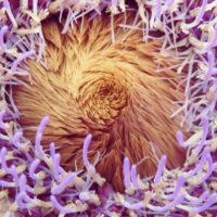 カラフルさが目に飛び込んでくる!美しき野菜たち9選の画像