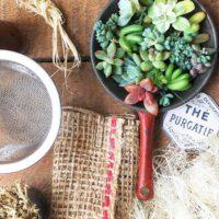 今週の人気『みどりのまとめ』5選!「茶こしリースの作り方」/「植え替えとピンセットの使い方」などの画像
