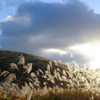 今週の人気『みどりのまとめ』5選!「スワッグの束ねかた」/「箱根湿生花園&仙石原ススキ草原に行ってきました(*´-`)」などの画像