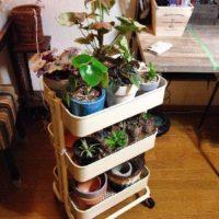 手頃でオシャレ! IKEAのワゴンが植物棚に使えるってホント?の画像