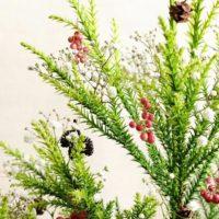 今週の人気『みどりのまとめ』5選!枝売りのコニファーでクリスマスツリーを作りました(*´-`)」/ 多肉本を探して…などの画像