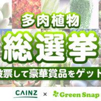 結果発表!CAINZ×GreenSnap総選挙シリーズの第2弾は「多肉植物総選挙」!の画像
