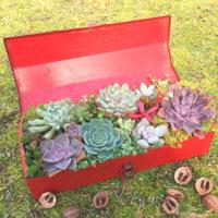 多肉植物の寄せ植えには工具箱がピッタリ!?素敵な工具箱寄せをご紹介します♪の画像