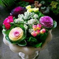 冬だからって、あきらめない!花の選び方次第で、色鮮やかな寄せ植えに。の画像