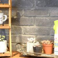 """多肉植物や観葉植物を育てている方、必見!ニオイが気にならない""""害虫対策アイテム""""のフォトモニター大募集!の画像"""