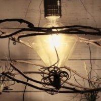 カインズのLEDフィラメント電球でグリーンインテリアを作ろう!【モニター企画】の画像