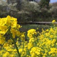 今週の人気『みどりのまとめ』5選!ネルソルを使ったハンギング寄せ / 四月のお庭、癒しの香り などの画像