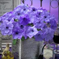 華やかに香る神秘的な花『ペチュニア ブルームーン』Blumen Hütteにて販売!の画像
