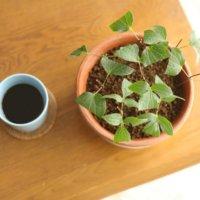 今週の人気『みどりのまとめ』5選!新緑🌿絶景の旅😌 / 睡蓮の成長とお世話について などの画像