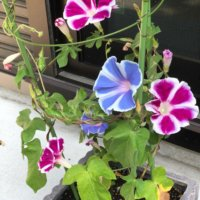 今週の人気『みどりのまとめ』5選!乗鞍・上高地 お花散歩🌼2018夏① 乗鞍畳平 / 初心者が更地からお庭をつくります。などの画像