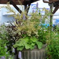 もっと魅力のある庭作りを!シュラブのコーディネート事例4選の画像
