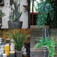「気軽に楽しむ」「育てて食べる」をコンセプトにグリーンの楽しみを広げるライフスタイルを発信するプロダクトブランド、『東京緑研究所』発表!の画像