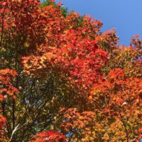 今週の人気『みどりのまとめ』5選!高野山の紅葉🍁 / 花壇にトレリスをたてよう🕊✨などの画像