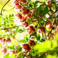 今週の人気『みどりのまとめ』5選!引っ越しに伴う観葉植物の箱詰め / 秋の庭散歩 などの画像