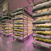 最先端技術を使った農業、FARMSHIPさんの工場を見学してきました!の画像