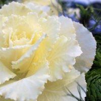 今年のバレンタインは花をプレゼントしませんか💐✨フラワーショップ「モンソーフルール」さんのフラワーケールを使ったアレンジをご紹介♪の画像