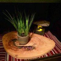 セキショウ(石菖)の育て方|栽培適所や水やりのコツは?の画像