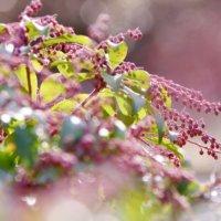 アセビの育て方|植え付けや挿し木の時期と方法は?の画像