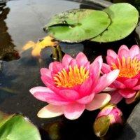 7月の誕生花|日にちごとの花の一覧や花言葉、フラワーギフトにもおすすめ?の画像
