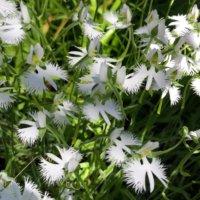 サギソウの育て方|植え付け方法や植え替え時期は?の画像